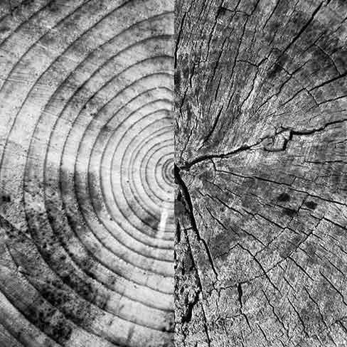 Softwood-Hardwood-488x488